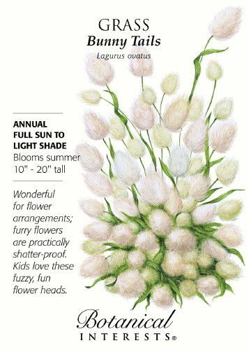 "Grass Bunny Tails Annual. Blooms in summer. 12""""-20"""" tall. Full sun or light shade. Bunny Tails Grass forms an upright fountain of charming soft and fluffy flower heads as soft as an actual bunny tai"