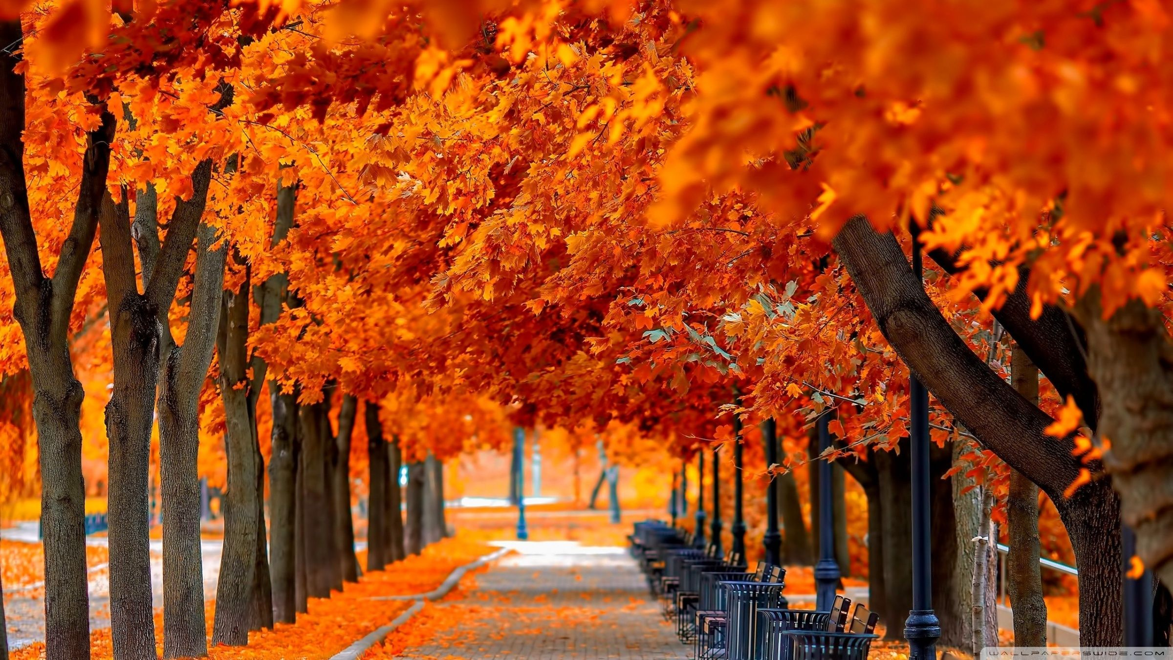 Fall In Love Wallpaper In Hd : Wallpaper Fall nice hd wallpapers with red and orange colors HD Wallpapers Pinterest Hd ...