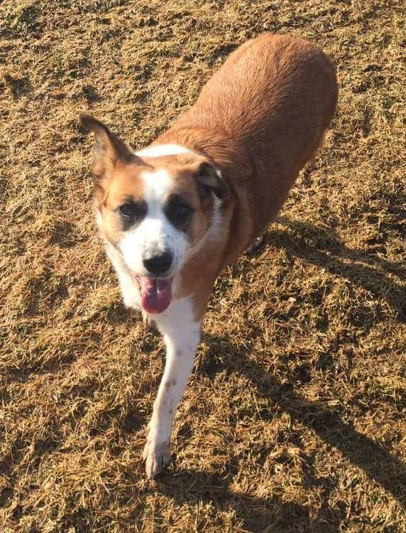 Adopt Brandy 200 on (With images) Dog ages, Help