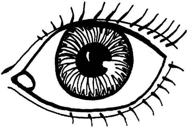 Eye Drawing Coloring Page Google Search Human Eye Drawing