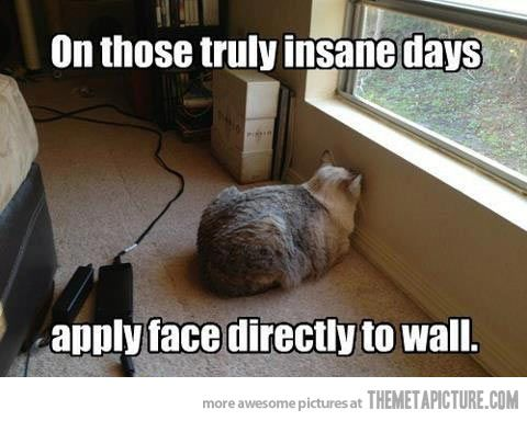 On Those Truly Bad Days Funny Cat Pictures Funny Cat Photos Funny Animal Memes