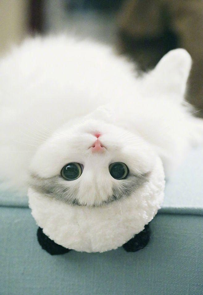 What a cute little guy. Cute baby animals, Cute animals