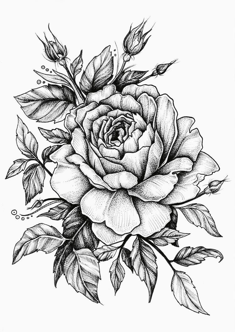 Pinterest Linell Beautiful Flower Drawings Rose Drawing Tattoo Flower Drawing