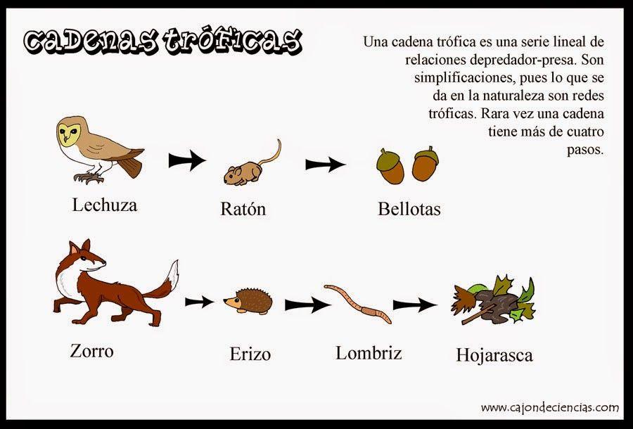 Resultado De Imagen Para Imagenes Cadena Trofica Mapa Mental Cadena Alimentaria Frases De Aguilas