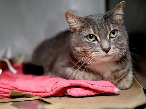 MICHA A1077693 NYC AC&C Urgent Cats Cats, Animals