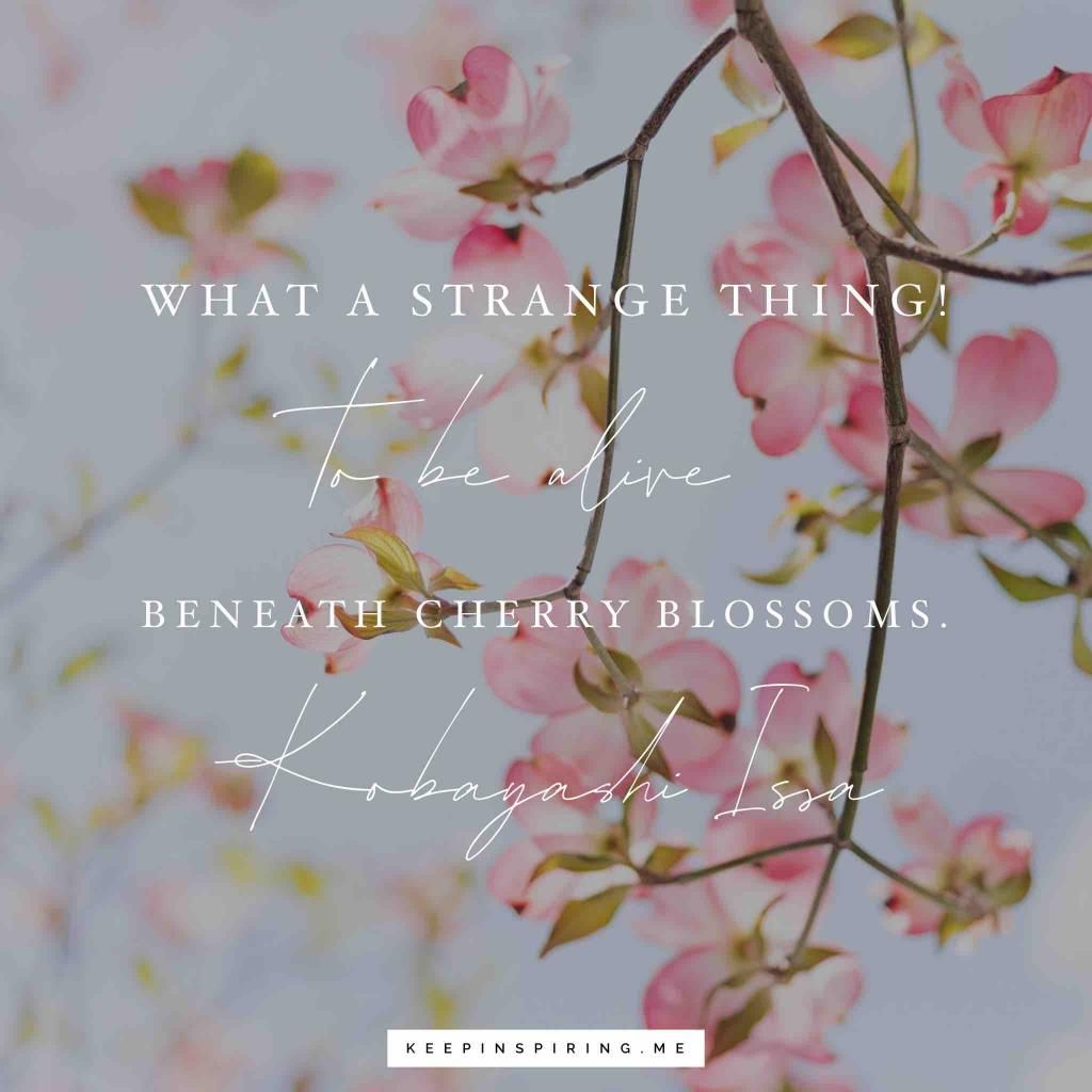 Welcome Springtime And Cherry Blossom With Our Best Quotes For The Season Spring Quotes Cherry Blossom Quotes Blossom Quotes
