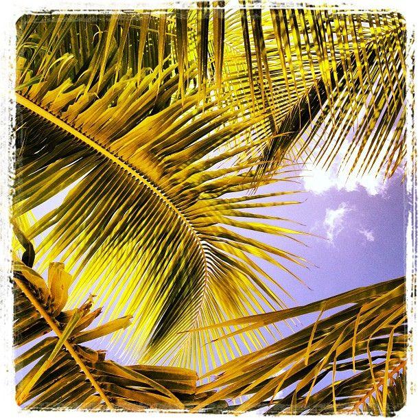 Skygazing through the palms on Boqueron Beach, Puerto Rico