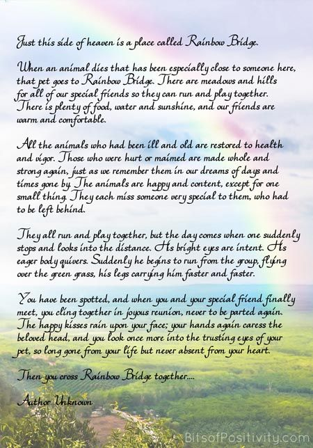 Rainbow Bridge Free Printable Poem Pet Loss Pet Quotes Dog