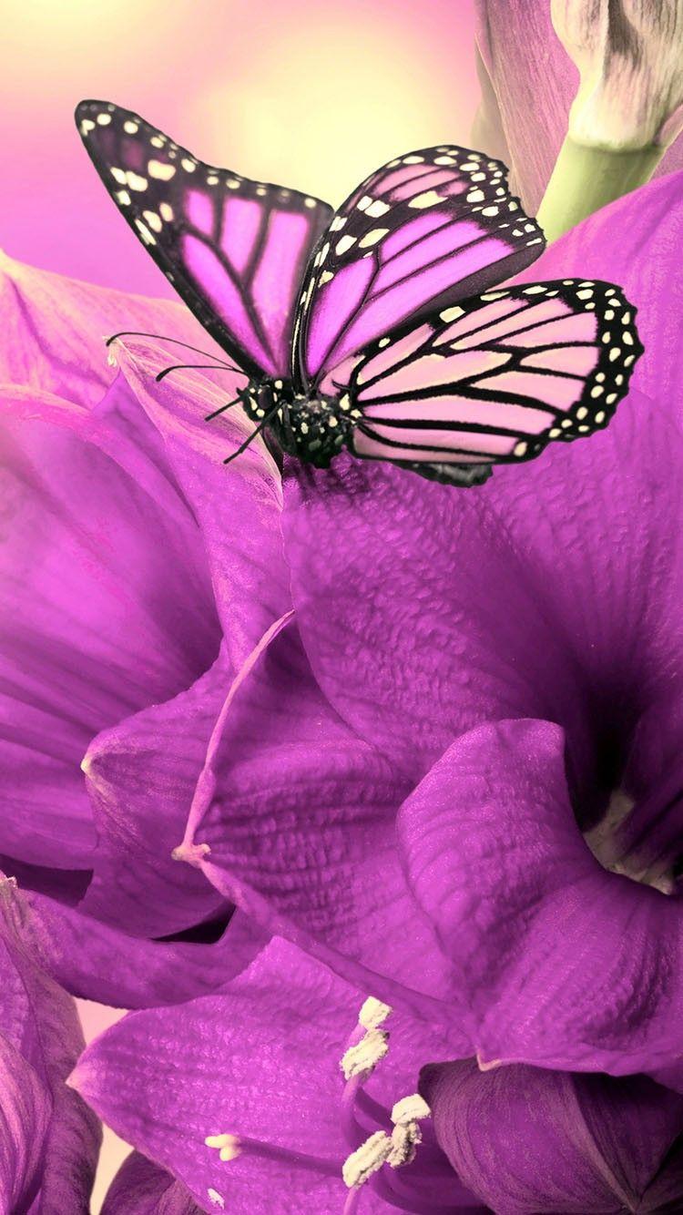 Cute Animal Wallpaper   Butterfly wallpaper iphone, Pink ...