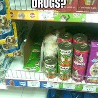 hey there…. guy…. want to buy some nip?
