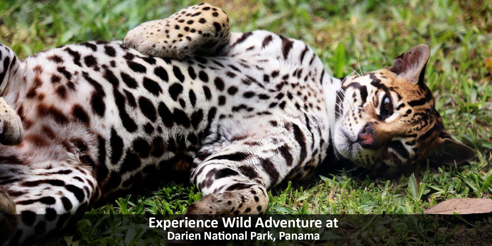 8d64658d062 Wild Adventure in Darien National Park