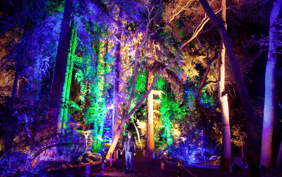 e4fb72b7646dd31941abe3e8562b1f6e - Enchanted Forest Of Lights At Descanso Gardens