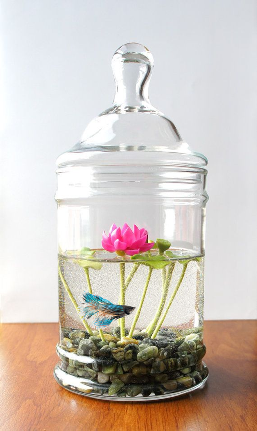 Betta lotus jar please no more comments the lotus not the tank beta fish reviewsmspy