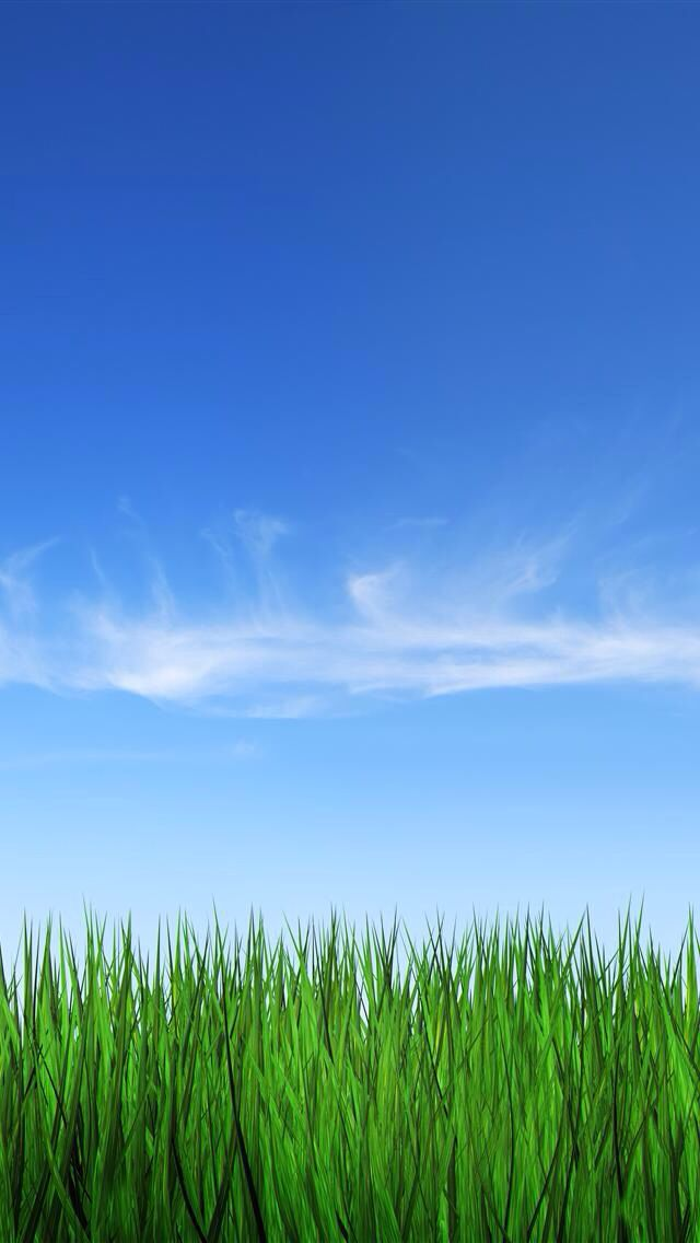 grass and sky backgrounds. blue sky and green grass backgrounds p