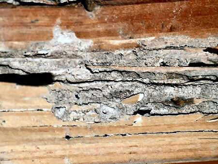 A Wood Sill Plate With Structurally Significant Termite Damage