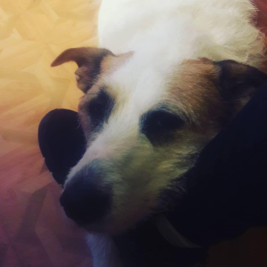 #dogsofinstagram #doggo #dogdays #cutedog #cuteanimals #dogs #animallovers #cutepets #doglover #instadog #dog...#Petsdogs #Petsunique #Petsdiy #babyPets #Petscats #Petsideas #Petsfunny #Petspreschooltheme #Petsquotes #smallPets #unusualPets #reptilePets #Petscutest #Petscare #Petssupplies #Petsbunny #Petsfish