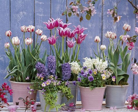 bulbes de printemps en pot 5 id es d 39 association jardin planting flowers garden planters. Black Bedroom Furniture Sets. Home Design Ideas