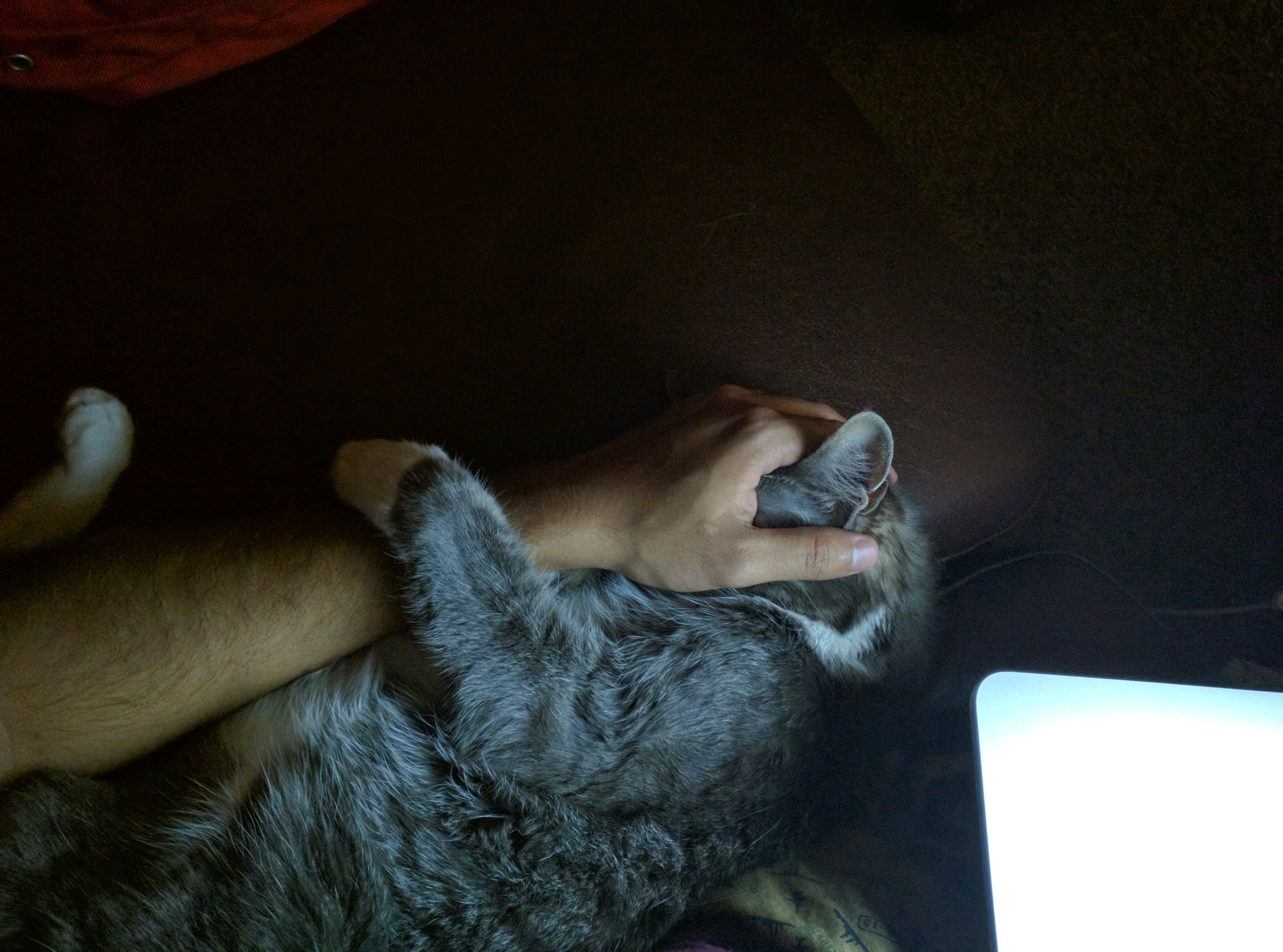 Pippin got into the habit of sleeping like this when he was a kitten; also he won't leave my side when I am working late into the night.