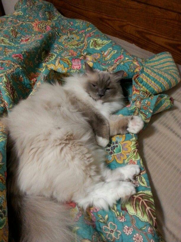 SLEEPY KITTY #sleepykitty
