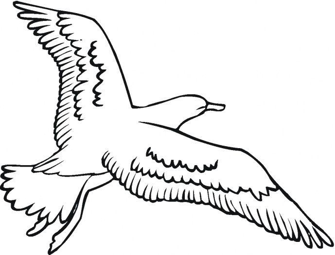Imagen De Gaviota Para Dibujar Y Colorear Paginas Para Colorear Aves Volando Dibujos De Colores