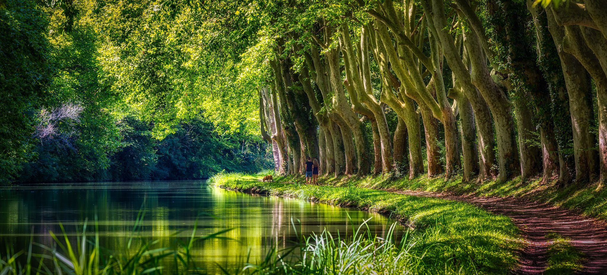 Fotografía Walking the Dog por Timm Green en 500px Canal du Midi, Francia