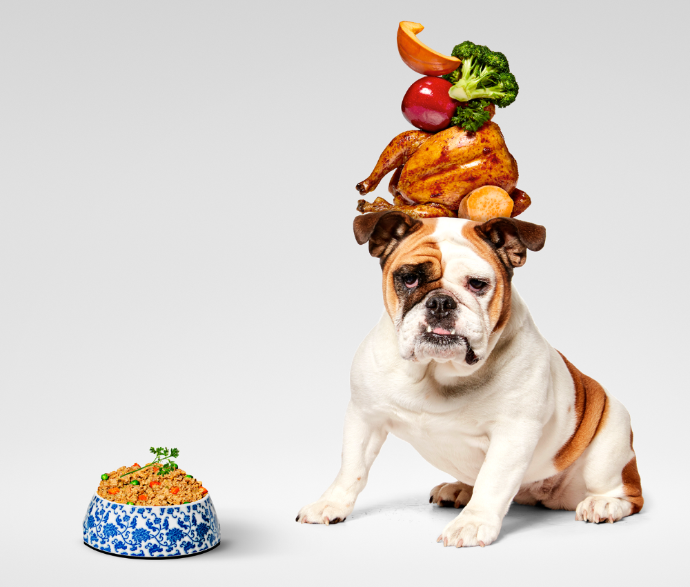 Pin On Pet Plate Dog Health