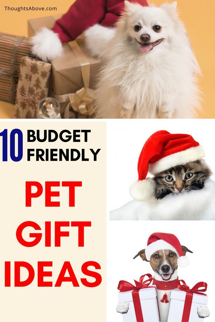 10 unique pet gift ideas that Your Beloved pet Will Thank You For ...
