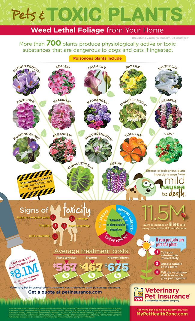 Pets And Toxic Plants Infographic Pet Health Dog Health Dog