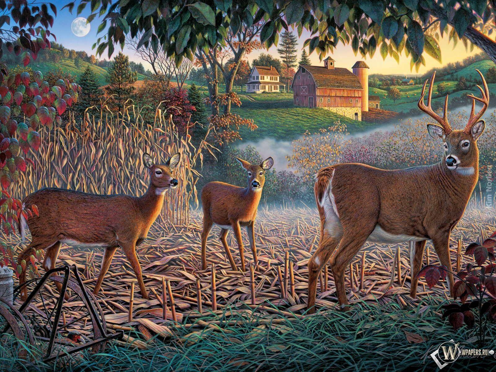 deer-high-whitetail-free_893425.jpg (1600×1200)