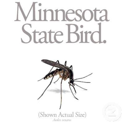 minnesota mosquito   Minnesota, Mosquito, Minnesota life