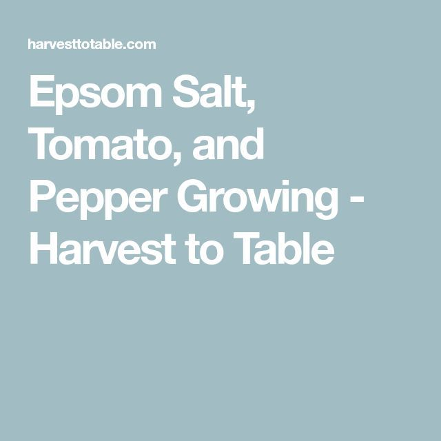 Epsom Salt Tomato And Pepper Growing – Harvest To Table 400 x 300