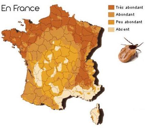 """Résultat de recherche d'images pour """"tiques france"""""""