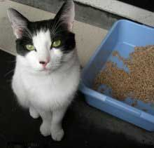 Cat Poo – How To Deal With Cat Toilet Problems