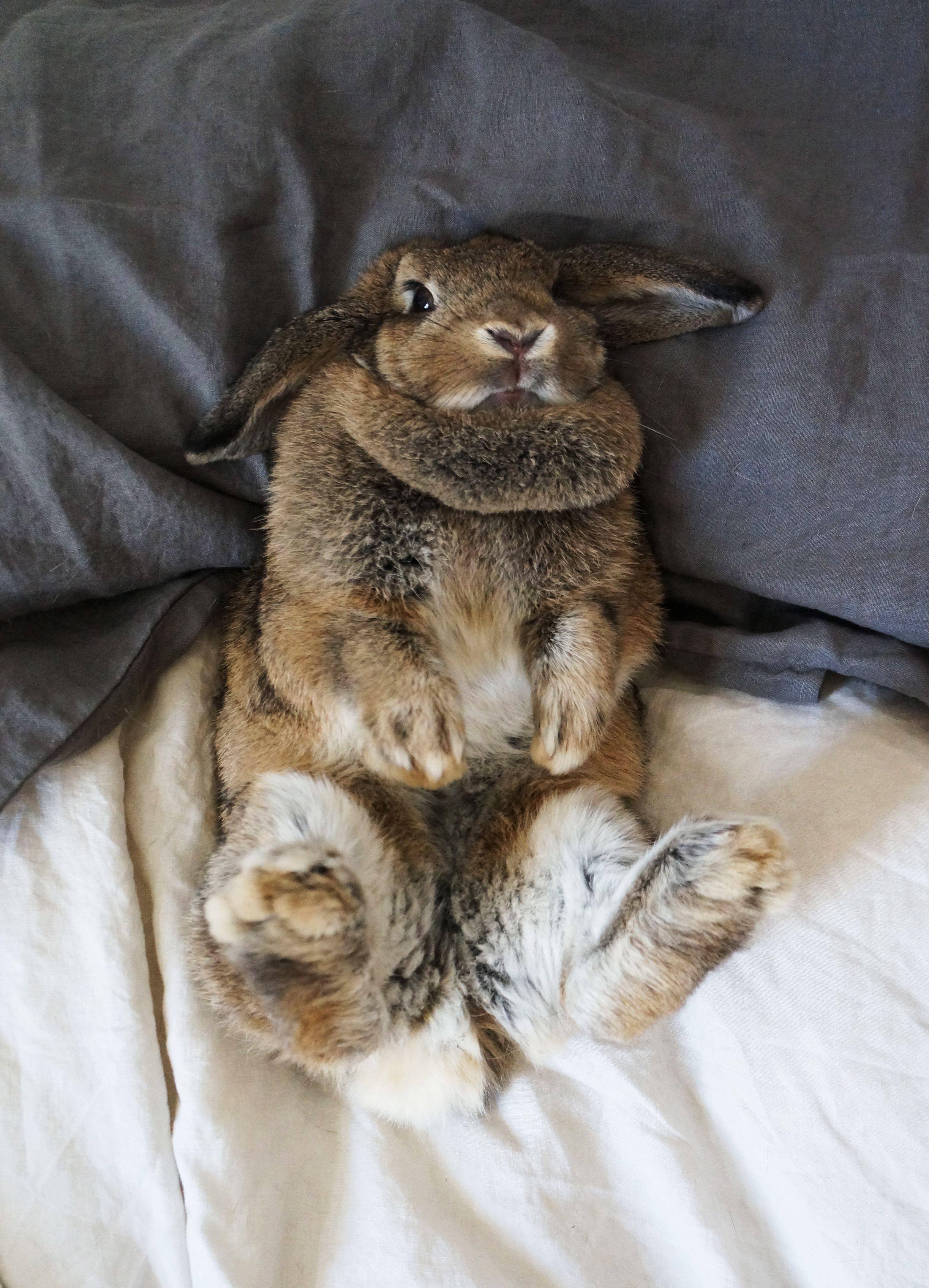 katia rohan adelaide sa animals pinterest s e tiere kaninchen und tiere. Black Bedroom Furniture Sets. Home Design Ideas