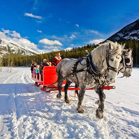 Horse drawn sleigh ride.