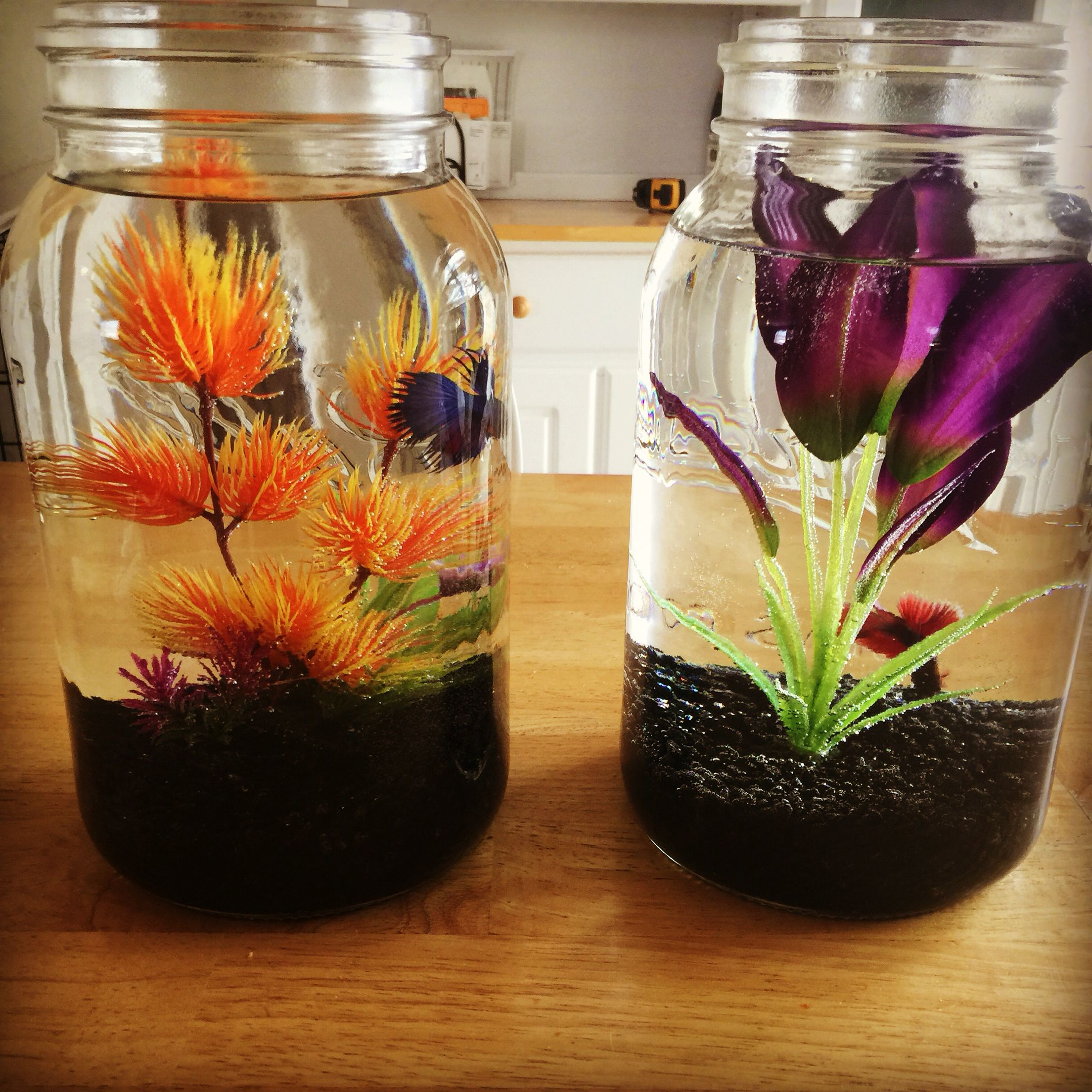 Beta fish bowl ideas gal size mason jars betta fish for Betta fish tank ideas