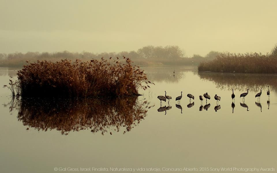 Amanecer, © Fotografía tomada por Gal Gross