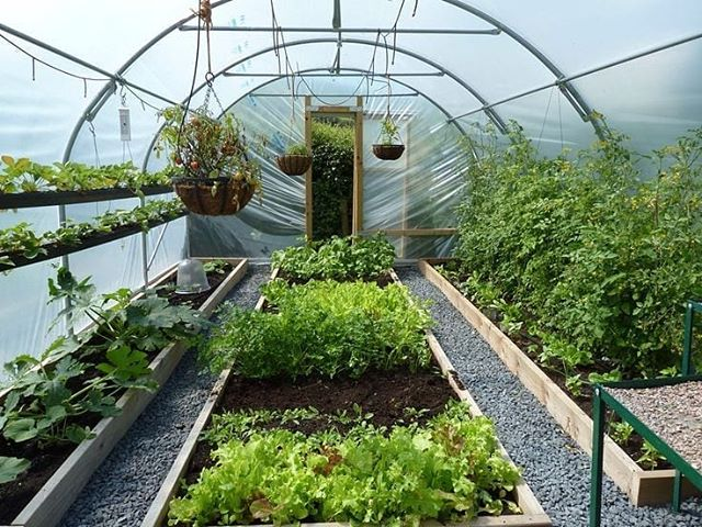 Garden Story On Instagram The Polytunnel Is Producing All The Fruit And Vegetable We Can Eat 2020 Follow Us For More Garden Pictures Gardenstoryus Aquaponics