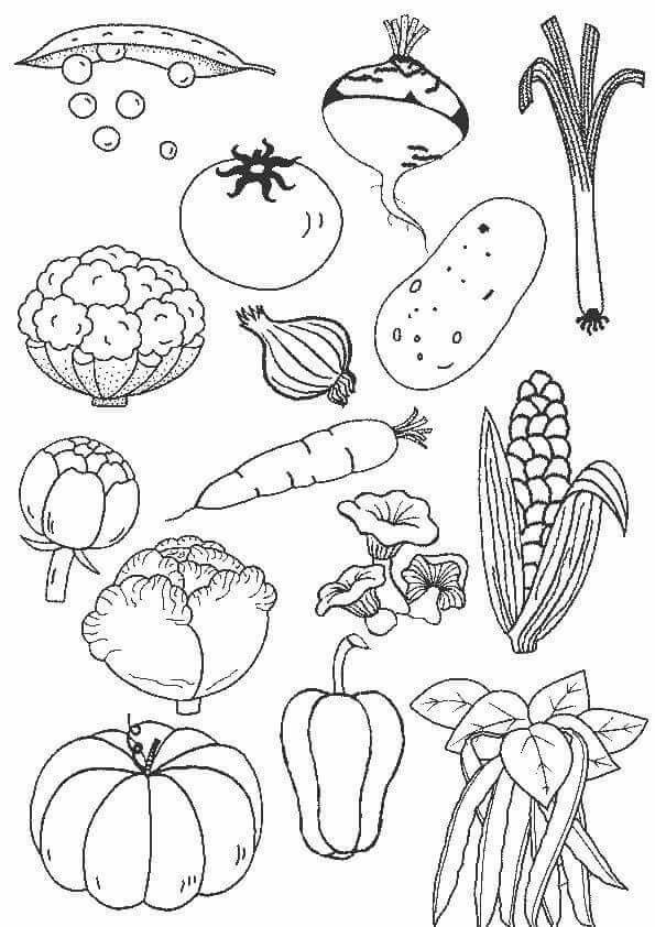Pin By Patricia Puga On Autumn Vegetable Coloring Pages Coloring Pages Coloring Books