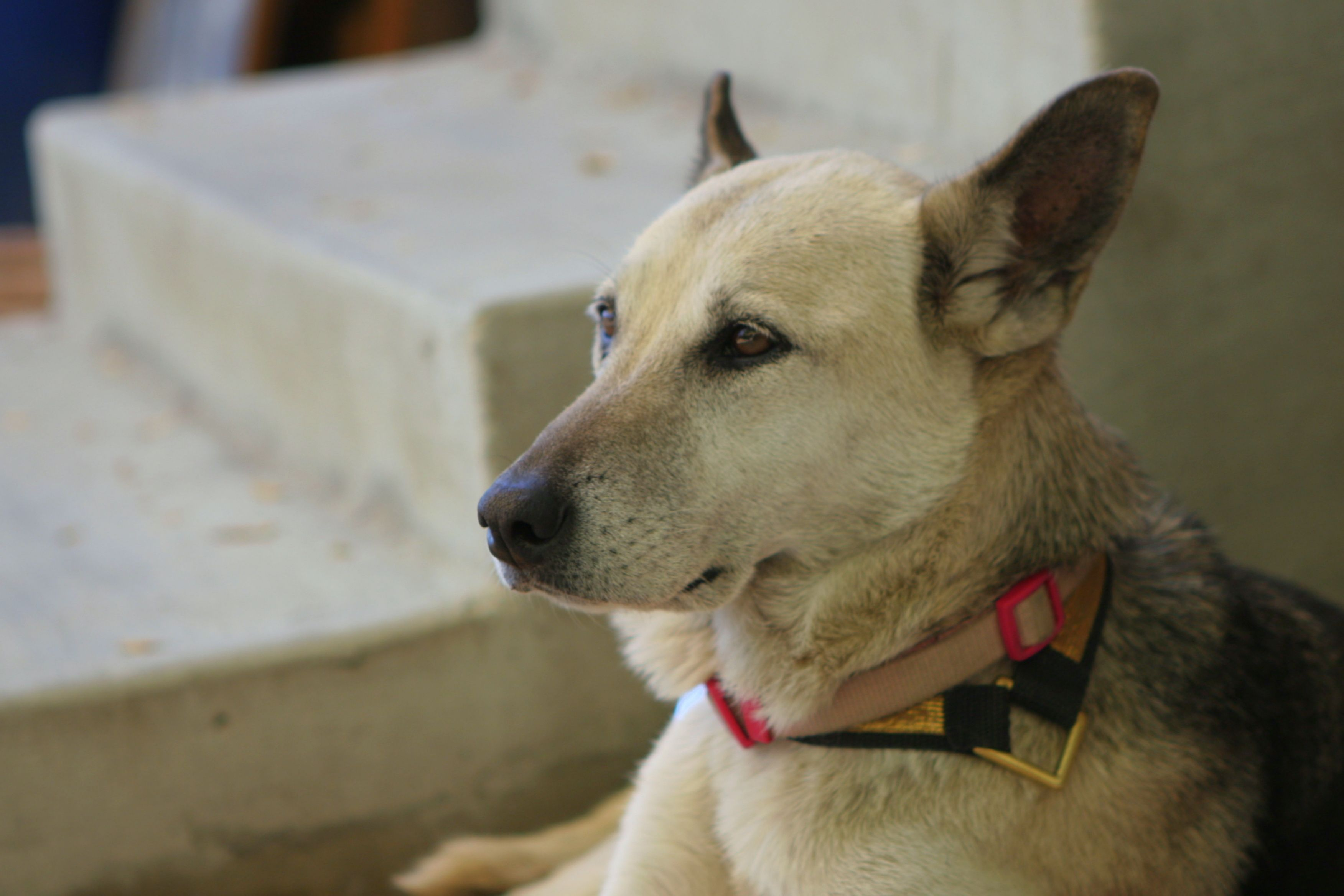 How to Treat Dog Mange With Home Reme s