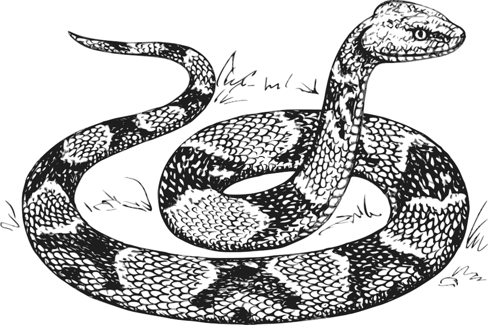 The Serpent Gate To Meta Ophion Snake coloring pages