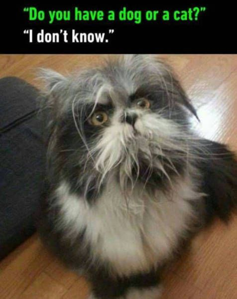 Funny Picdump  (53 pics) - Picture
