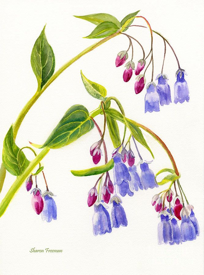 Mountain Bluebells Vertical Design by Sharon Freeman - Mountain Bluebells Vertical Design Painting - Mountain Bluebells Vertical Design Fine Art Prints and Posters for Sale
