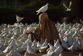 Pigeons & more pigeons