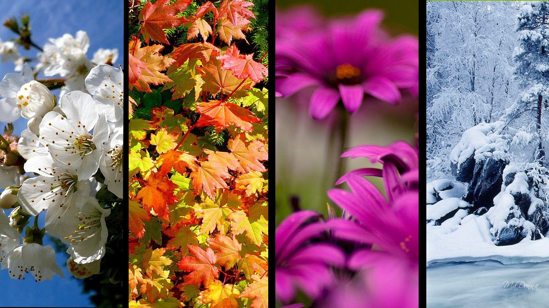 Summerflowers Wallpaper Stores Seasons Wallpaper
