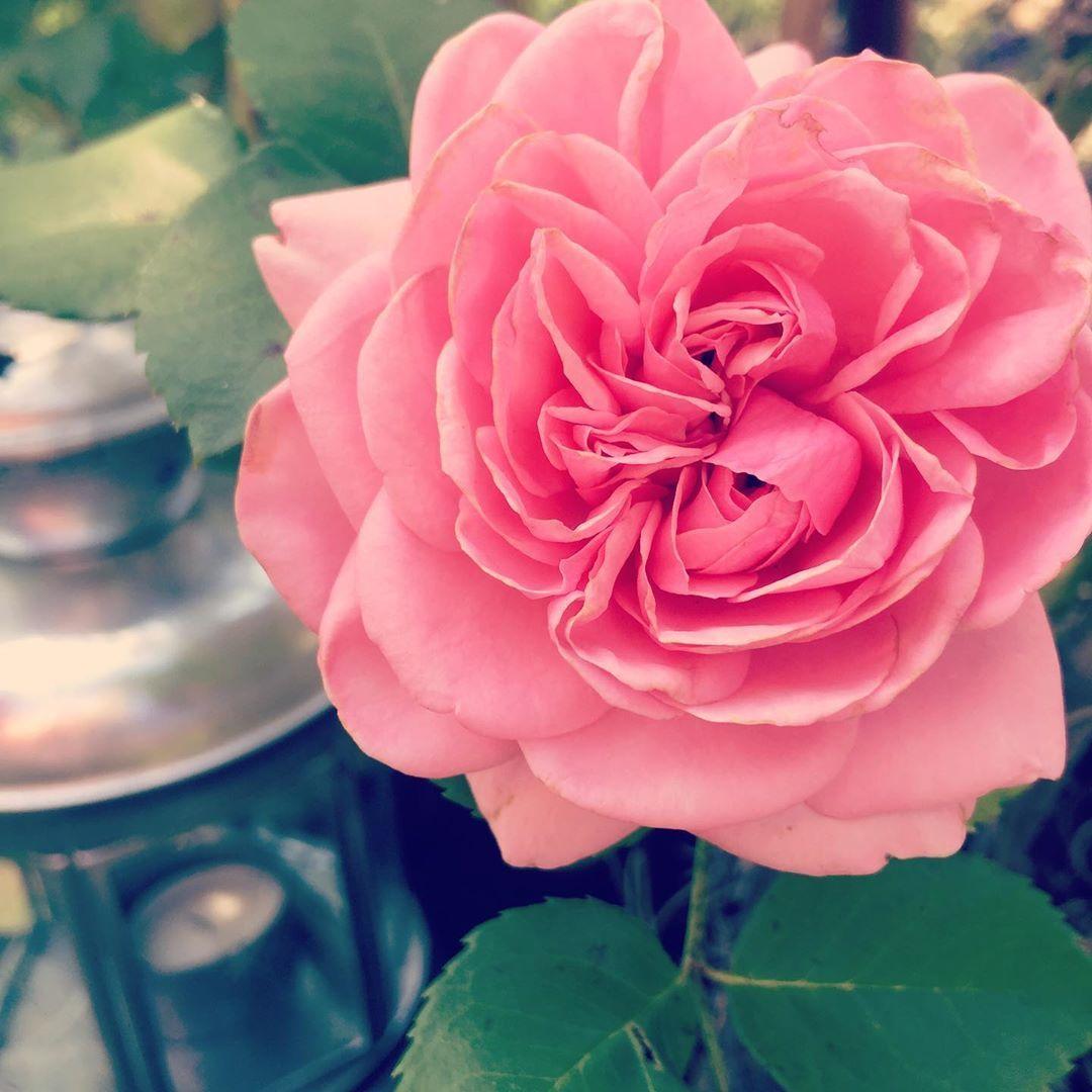Liebe Grusse Zum Dienstag Diese Kletter Rose Habe Ich Vor 2 Jahren Zum Geburtstag Geschenkt Bekommen Und Dieses J Garten Deko Kletterrose Garten Ideen