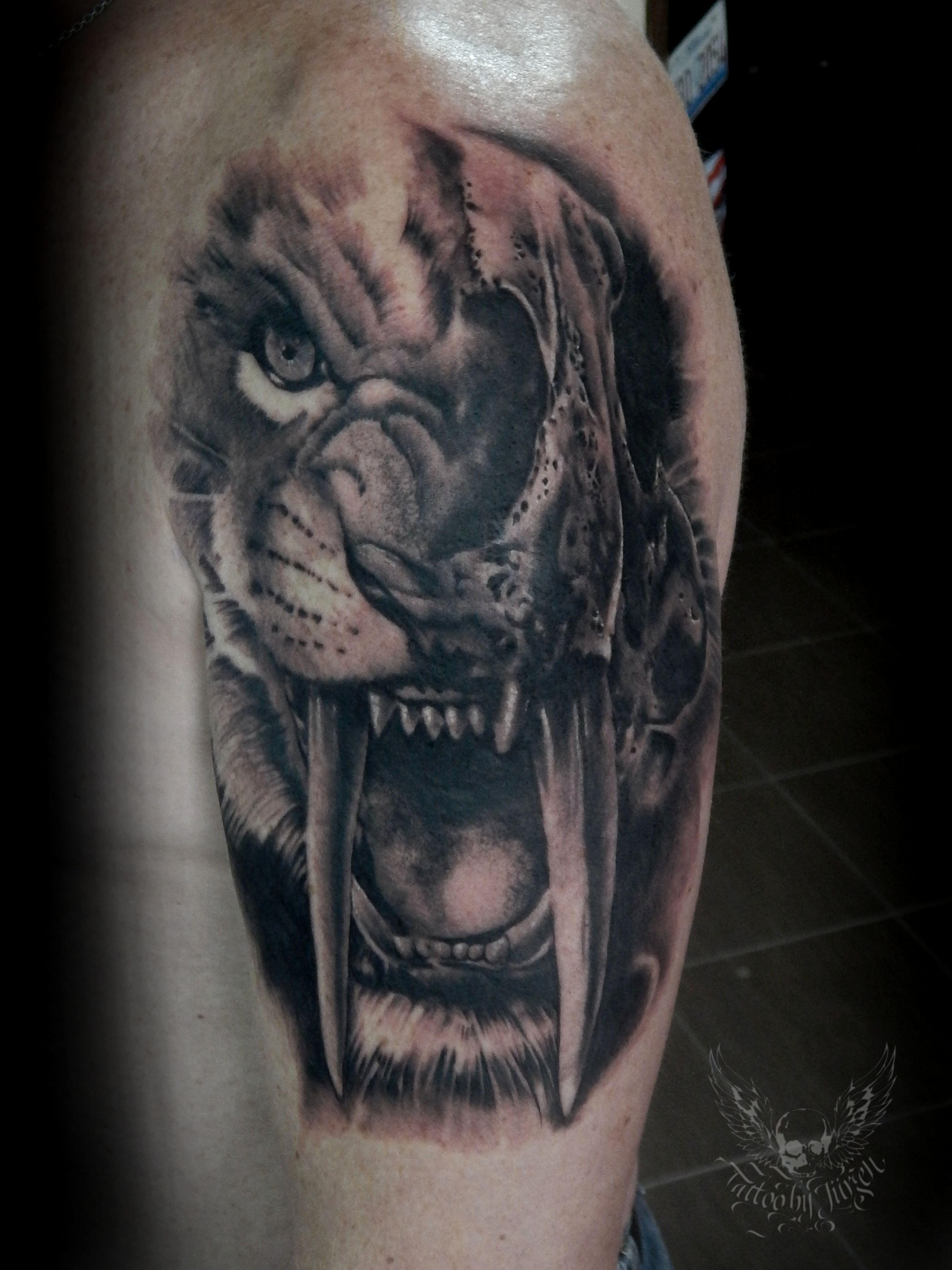 Saber Tooth Tiger Skull Tattoo Wwwgalleryhipcom The Hippest