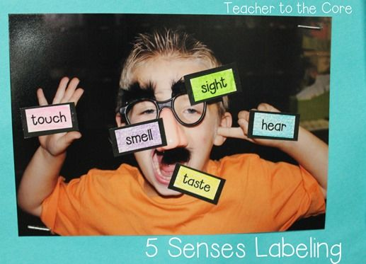 The best 5 senses unit for first and second grade! Engaging but easy reading, journals, experiments, and so much more!