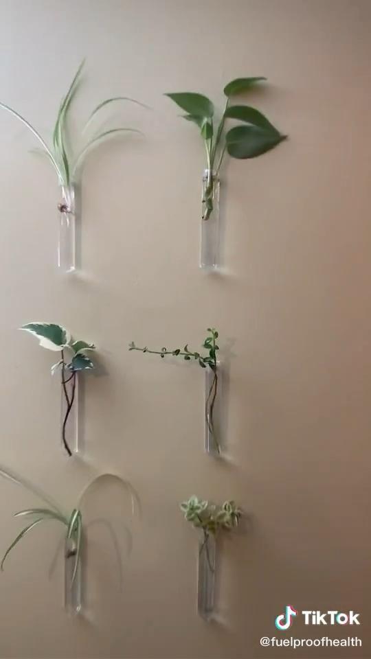 PLANT 🌱 PROPAGATION WALL