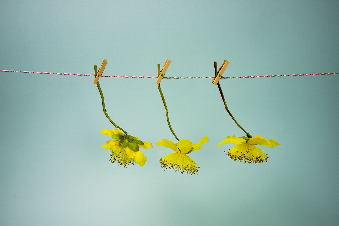 Hanging Daisies by Jo Semmens #floral #fineart #photography